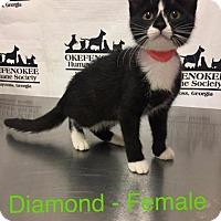 Adopt A Pet :: Diamond - Waycross, GA
