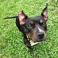 Adopt A Pet :: Millie - Janesville, WI