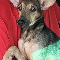Adopt A Pet :: Radar - Longview, TX