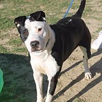 Adopt A Pet :: CALI - Ocala, FL