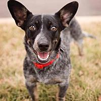 Adopt A Pet :: Jenni - St Louis, MO