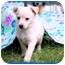 Photo 1 - Terrier (Unknown Type, Medium) Mix Puppy for adoption in Fredericksburg, Virginia - Nitro