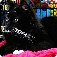 Adopt A Pet :: Rascal - Beverly Hills, CA