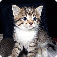Adopt A Pet :: Maxie - Roseville, MI