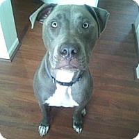 Adopt A Pet :: Duke - Grand Rapids, MI