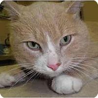 Adopt A Pet :: Noggin - Warren, MI