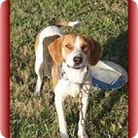 Adopt A Pet :: Magnolia - Staunton, VA