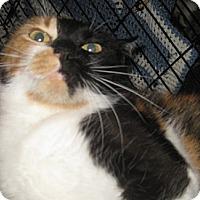 Adopt A Pet :: Chacha - Dallas, TX