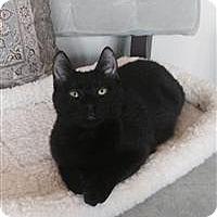 Adopt A Pet :: Bela - Alexandria, VA