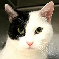 Adopt A Pet :: Doris - Hilton Head, SC