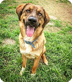 German Shepherd Dog Mix Dog for adoption in Fredericksburg, Texas - Snickers