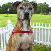 Adopt A Pet :: Tank - Louisville, OH