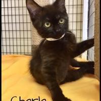 Adopt A Pet :: Charla - Jasper, IN