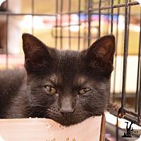 Adopt A Pet :: Judy - Flushing, MI