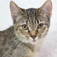 Adopt A Pet :: Ani II - Raleigh, NC