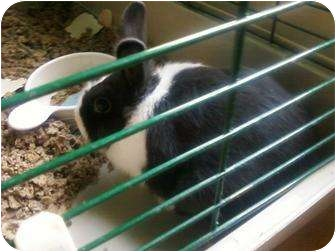 Other/Unknown Mix for adoption in Edon, Ohio - Bunny