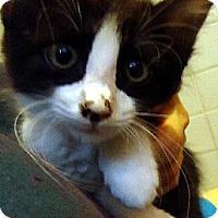 Adopt A Pet :: Prescott - Jacksonville, FL