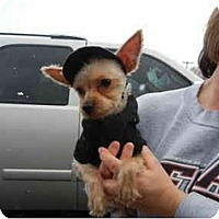 Adopt A Pet :: Dakota - Glastonbury, CT