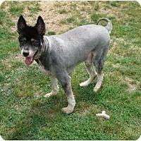 Adopt A Pet :: DieselPENDING - Toronto/Etobicoke/GTA, ON