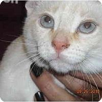 Adopt A Pet :: Marshmello & Butterscoth - Riverside, RI
