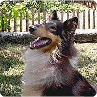 Adopt A Pet :: Friday - Gardena, CA