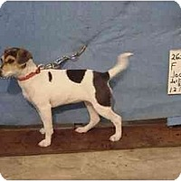 Adopt A Pet :: Jodie/Adopted! - Zanesville, OH
