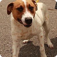 Adopt A Pet :: Bernard ($200 adoption fee) - Staunton, VA