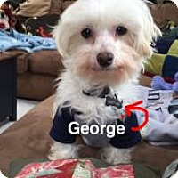 Adopt A Pet :: George - Marlton, NJ