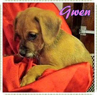 Boxer Mix Puppy for adoption in Ahoskie, North Carolina - Gwen
