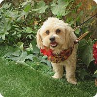 Adopt A Pet :: **FONZIE** - Stockton, CA