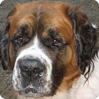 Adopt A Pet :: BUSTER BROWN - Sudbury, MA