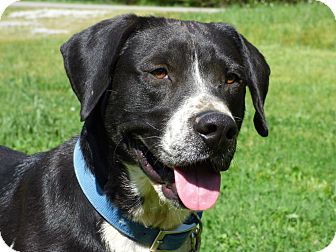 Labrador Retriever Mix Dog for adoption in Centerville, Tennessee - Buddy