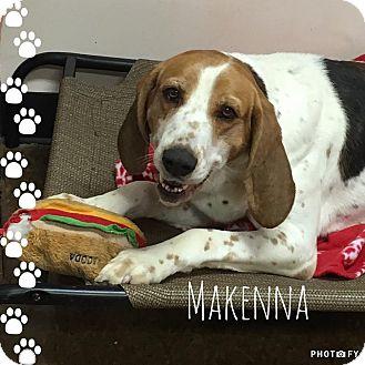 Hound (Unknown Type) Mix Dog for adoption in Albion, New York - Makenna