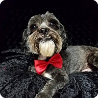 Adopt A Pet :: Felix Ranger - Urbana, OH
