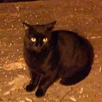 Adopt A Pet :: Poe* - Trexlertown, PA