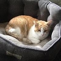 Adopt A Pet :: NAPA - Pt. Richmond, CA