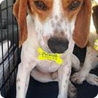 Adopt A Pet :: Tre - Freeport, ME