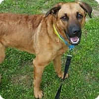 Adopt A Pet :: Pascal - Memphis, TN