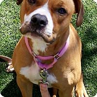 Adopt A Pet :: Cali - Las Vegas, NV