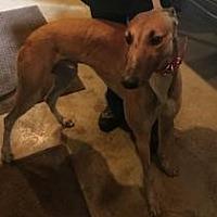 Adopt A Pet :: Atascocita Daze - Gerrardstown, WV