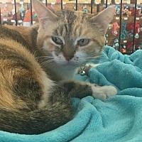 Adopt A Pet :: Marla - St. Cloud, FL