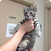 Adopt A Pet :: Petco2  B - Triadelphia, WV