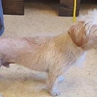 Adopt A Pet :: Chucho - Humble, TX