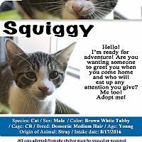 Adopt A Pet :: Squiggy - Texarkana, AR