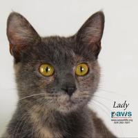 Adopt A Pet :: Lady Jane Eyre - Belle Chasse, LA