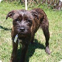 Adopt A Pet :: Brianne - Poughkeepsie, NY