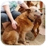 Photo 2 - Australian Cattle Dog Mix Dog for adoption in Phoenix, Arizona - Tracey **ADOPTION PENDING**