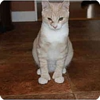 Adopt A Pet :: Harold - Putnam Valley, NY