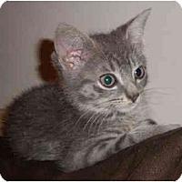 Adopt A Pet :: Olie - New York, NY