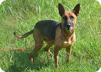 German Shepherd Dog Dog for adoption in Lebanon, Tennessee - Lola